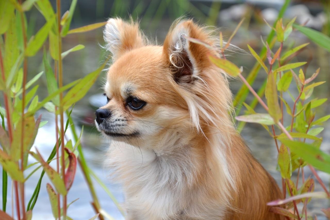 Quelindas-Chihuahua-13