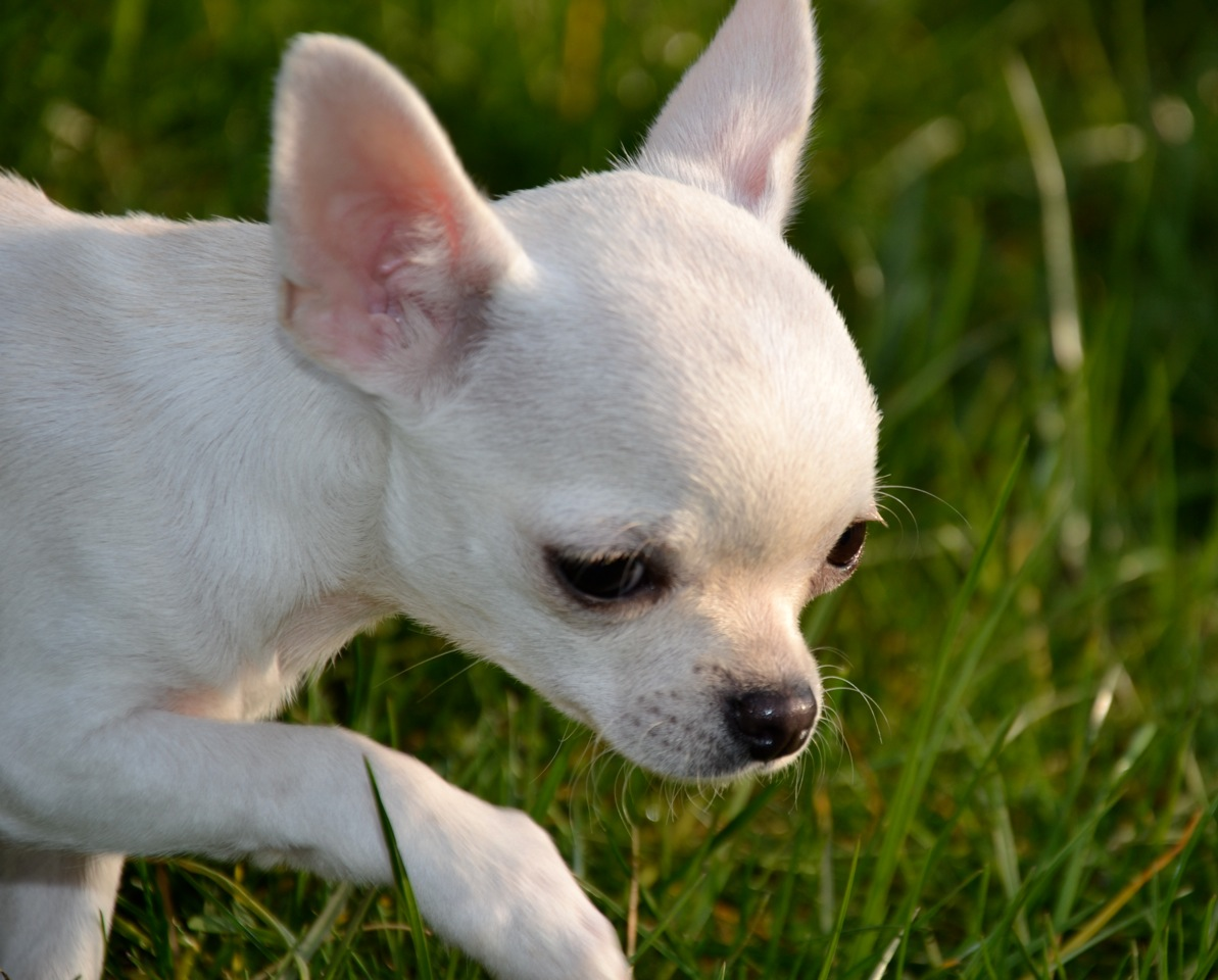 Quelindas-Chihuahua-14