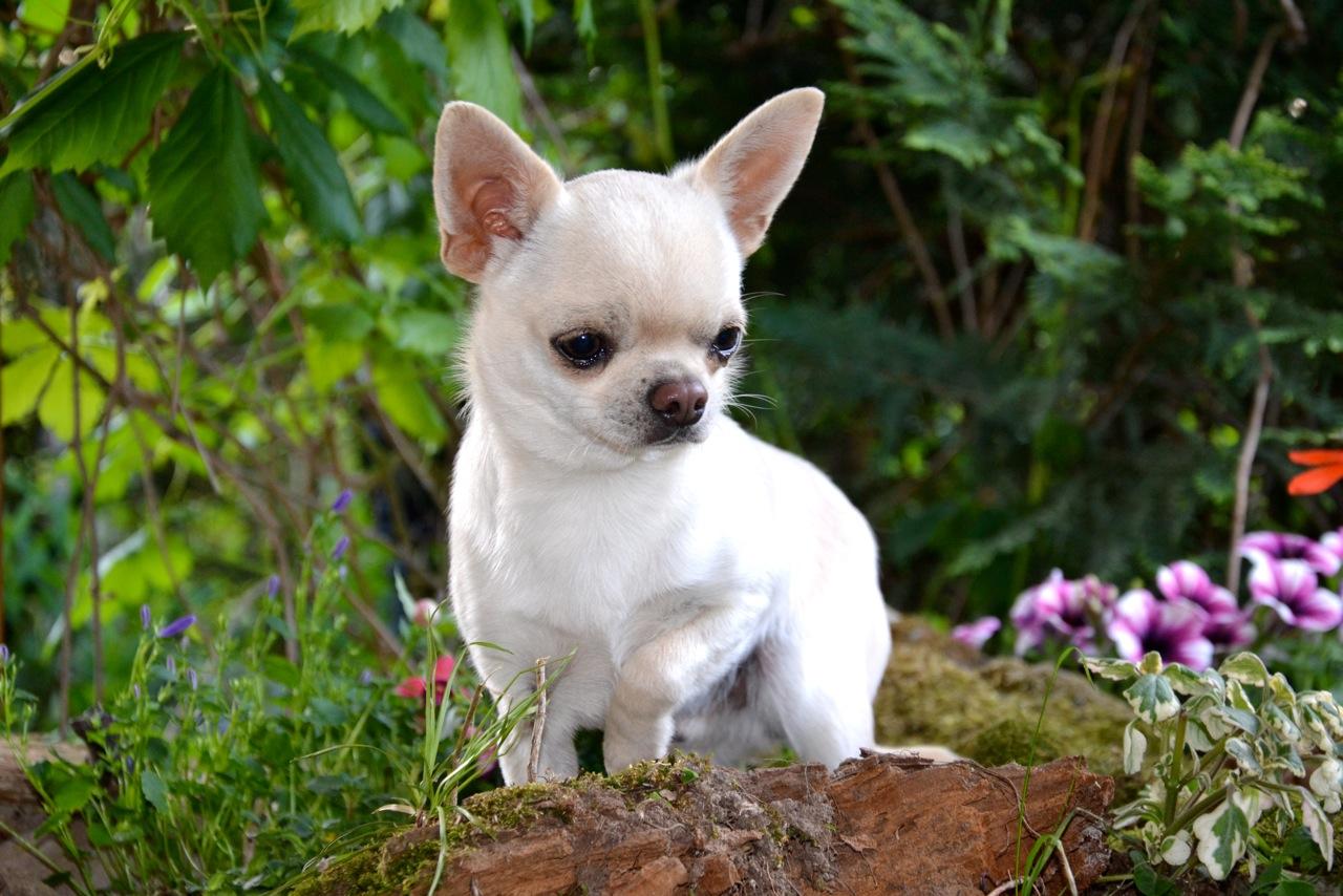Quelindas-Chihuahua-18