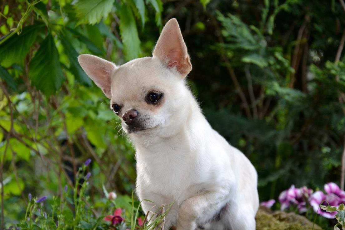Quelindas-Chihuahua-19