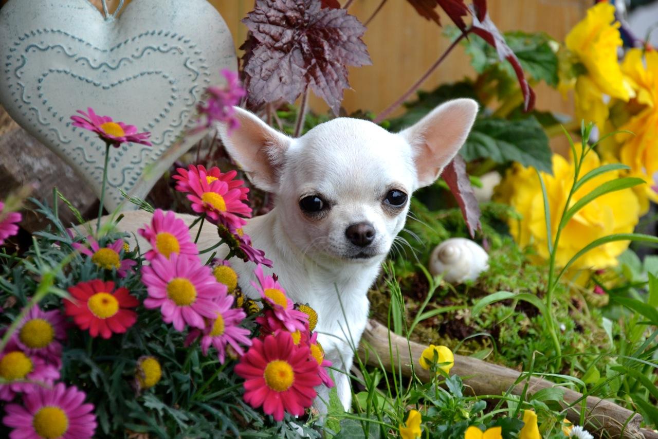 Quelindas-Chihuahua-2