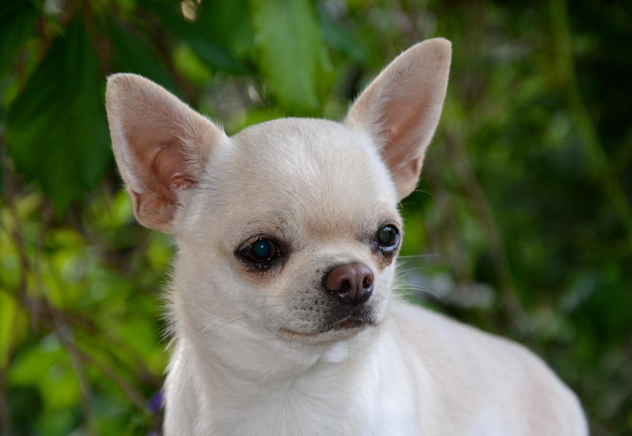 Quelindas-Chihuahua-20