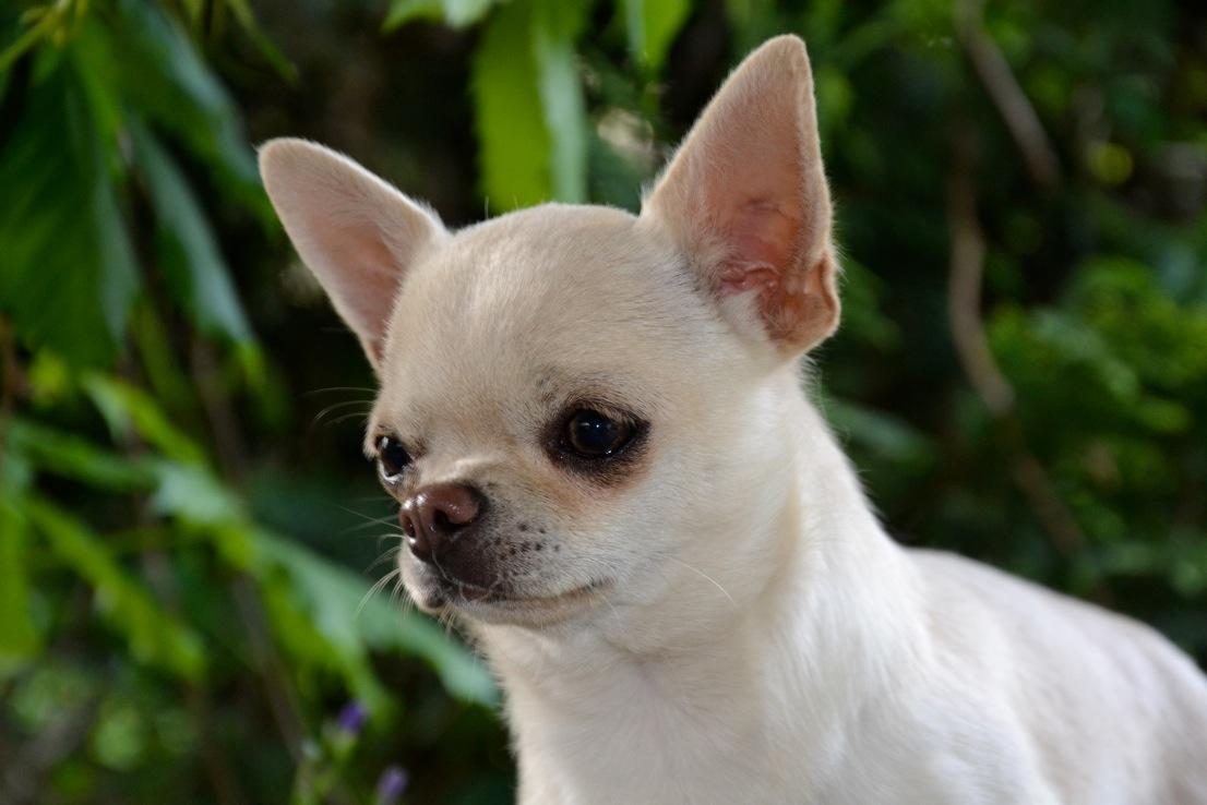 Quelindas-Chihuahua-21