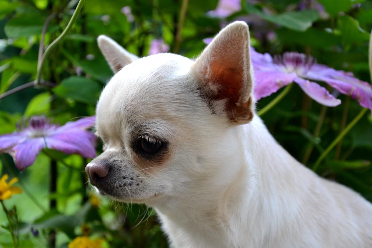 Quelindas-Chihuahua-22