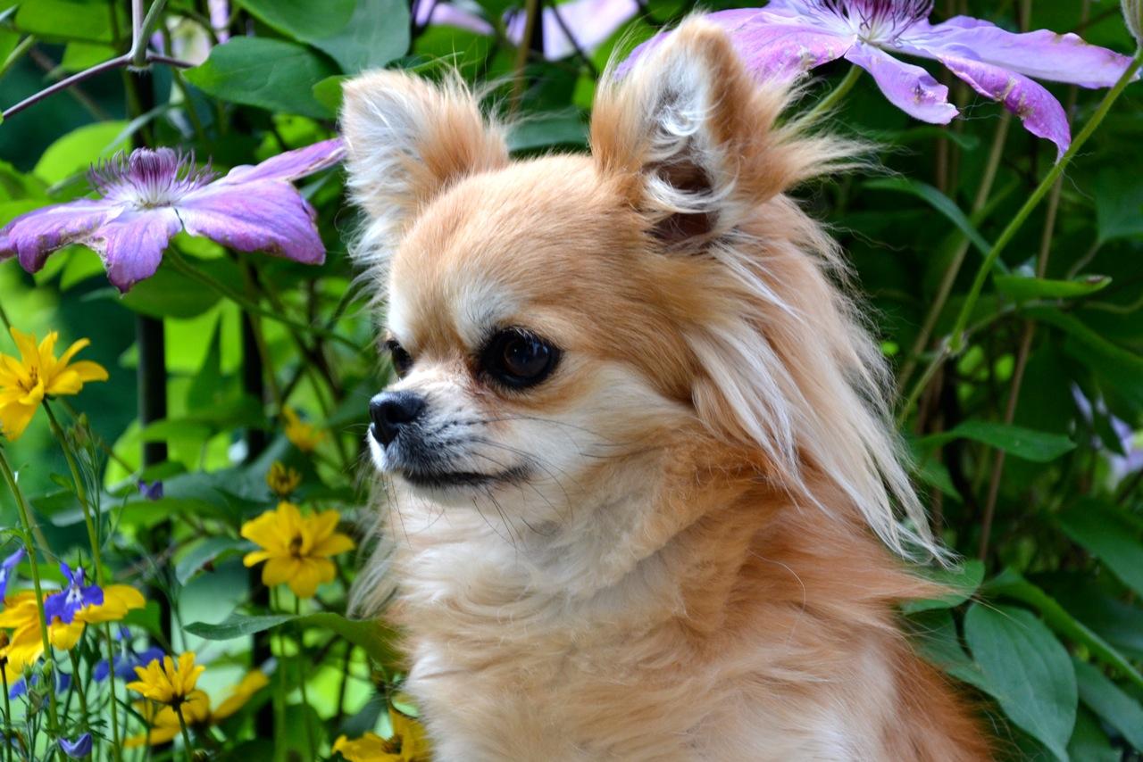 Quelindas-Chihuahua-23