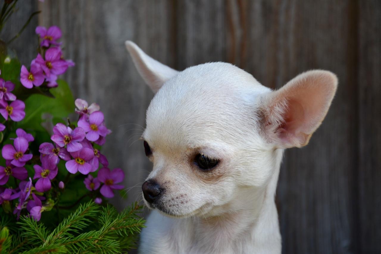 Quelindas-Chihuahua-24