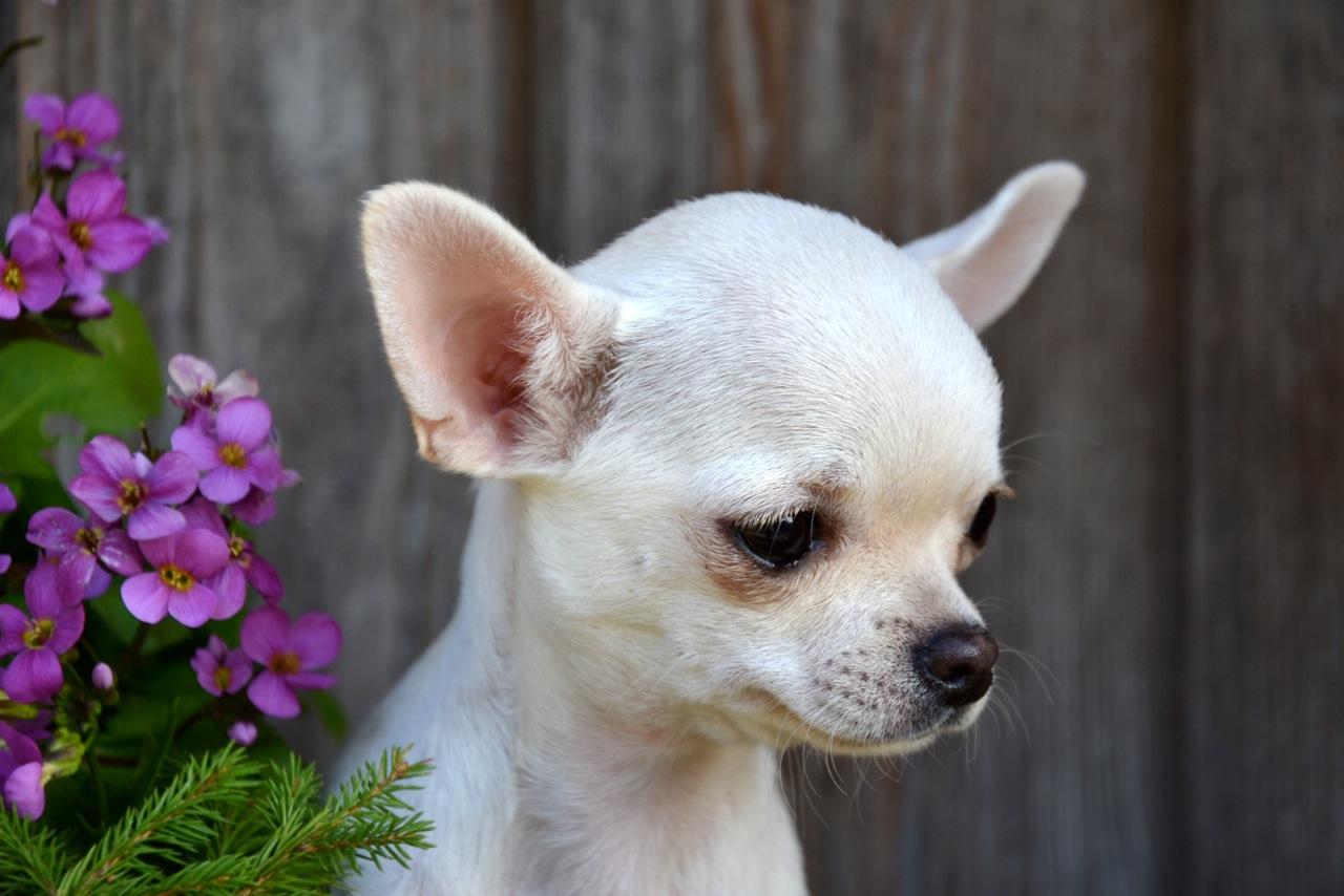 Quelindas-Chihuahua-25