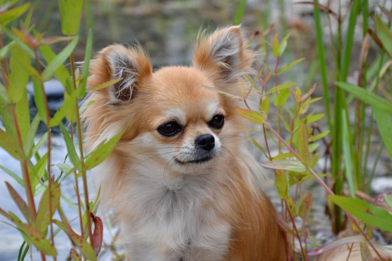 Quelindas-Chihuahua-27