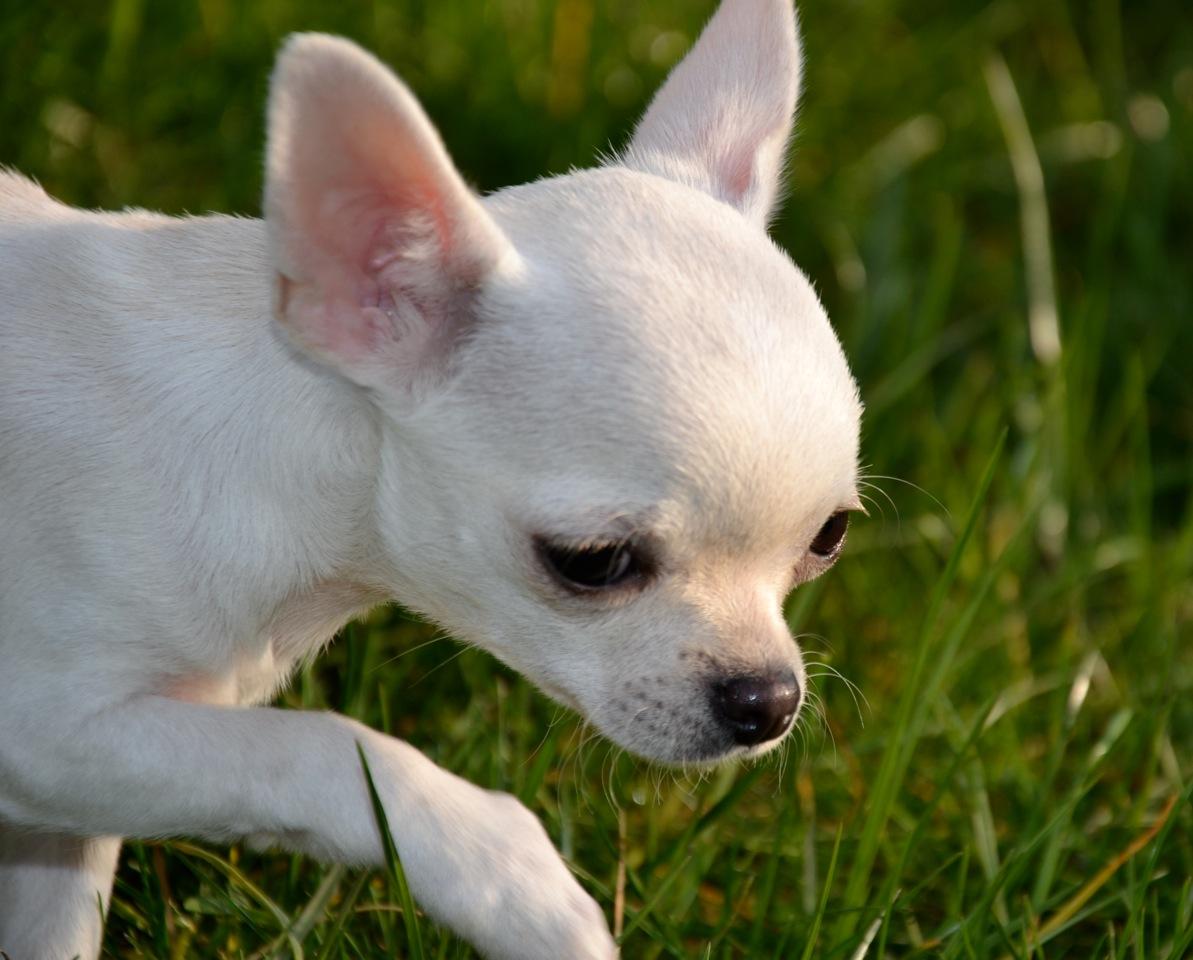 Quelindas-Chihuahua-29