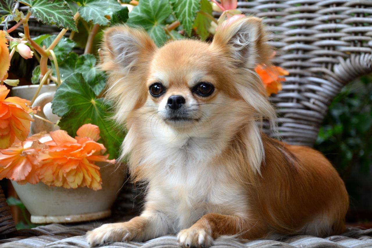 Quelindas-Chihuahua-30