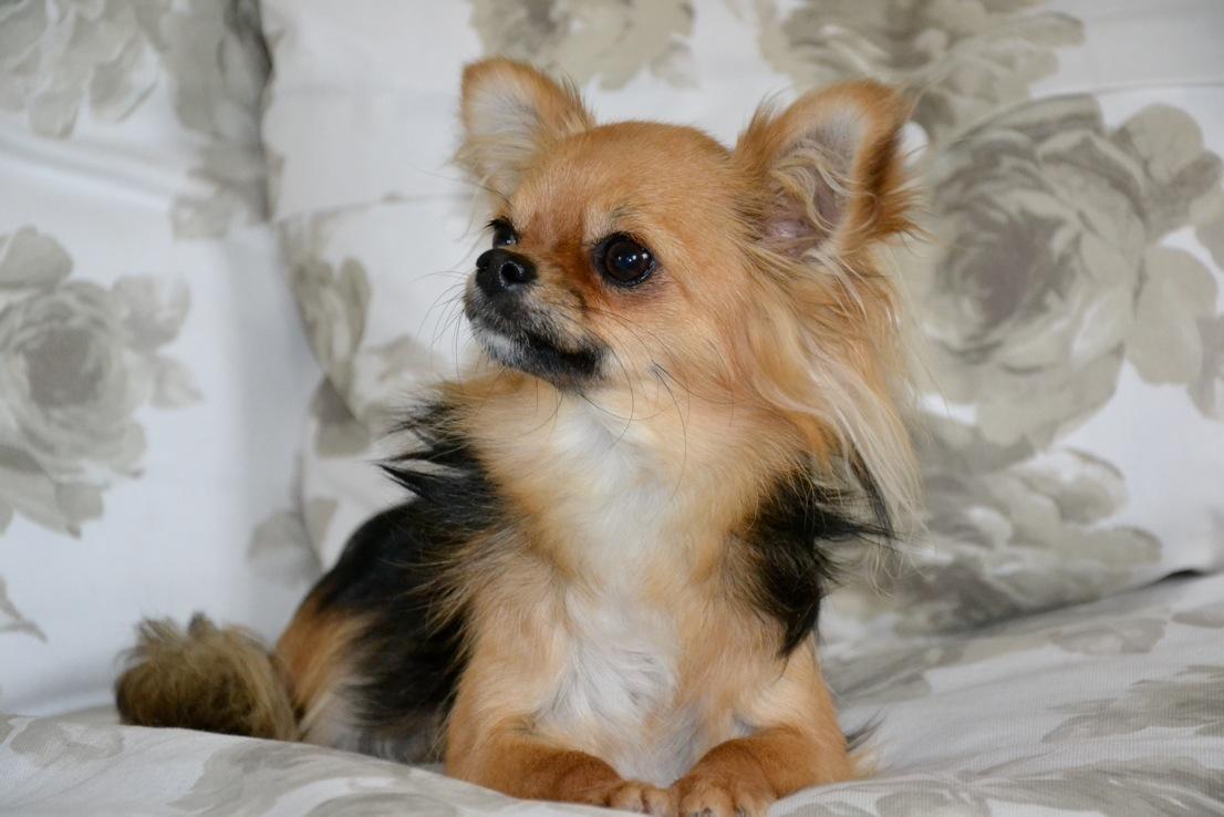 Quelindas-Chihuahua-31
