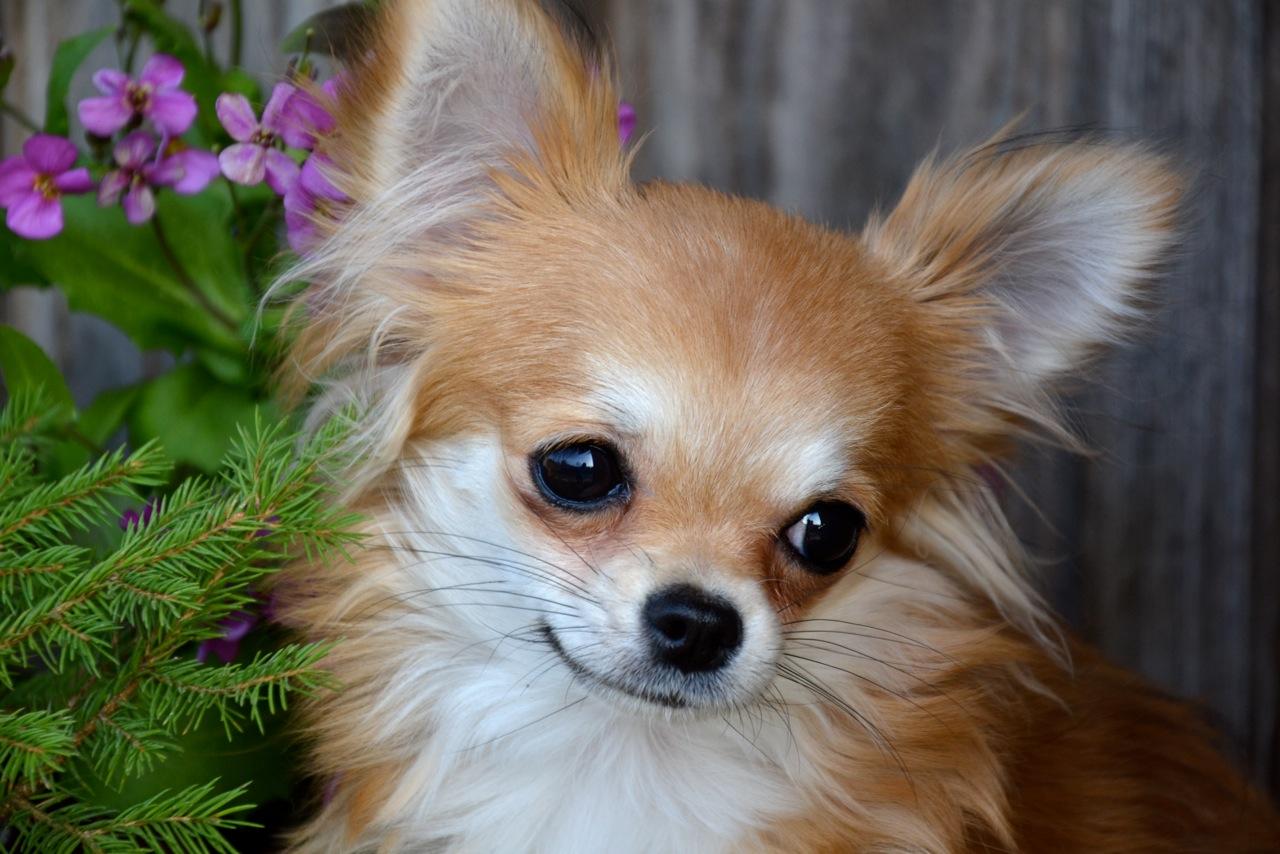 Quelindas-Chihuahua-32