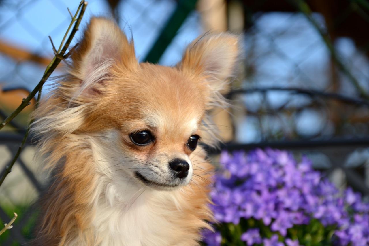 Quelindas-Chihuahua-34