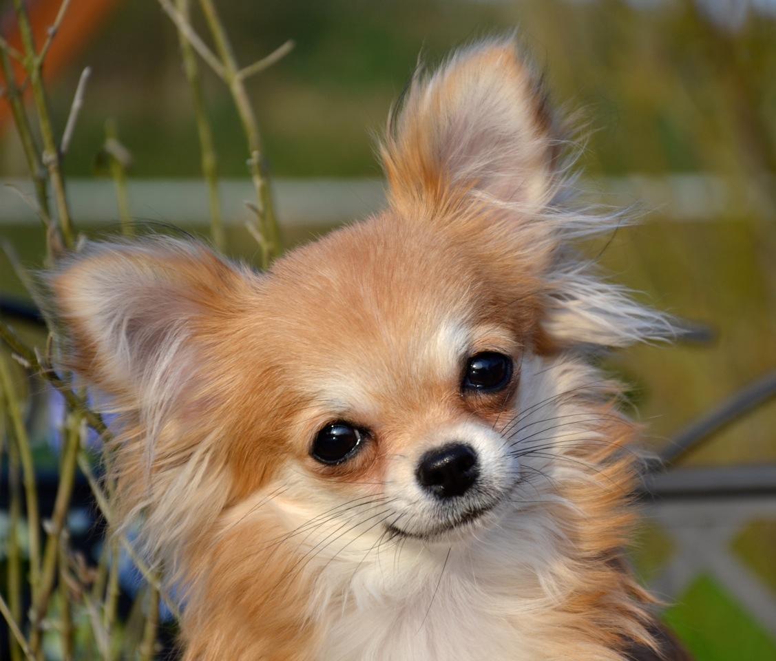 Quelindas-Chihuahua-35