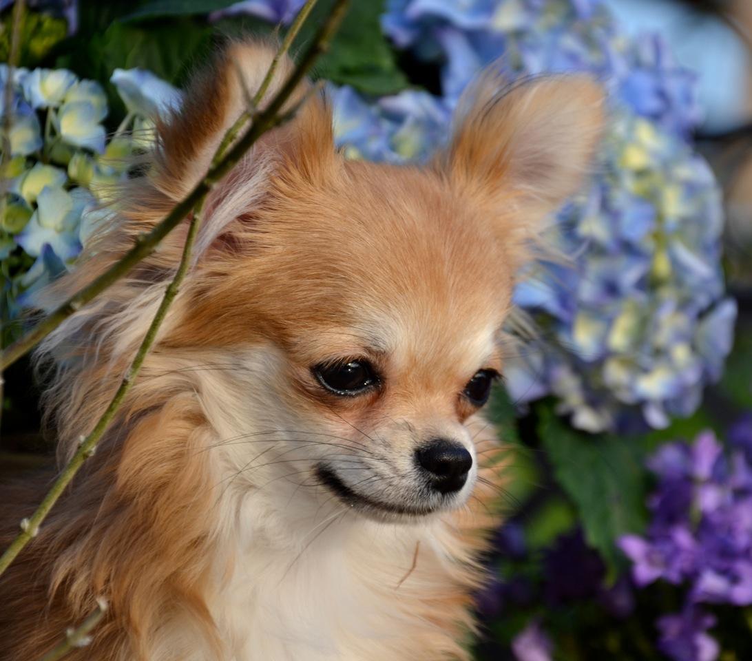 Quelindas-Chihuahua-39
