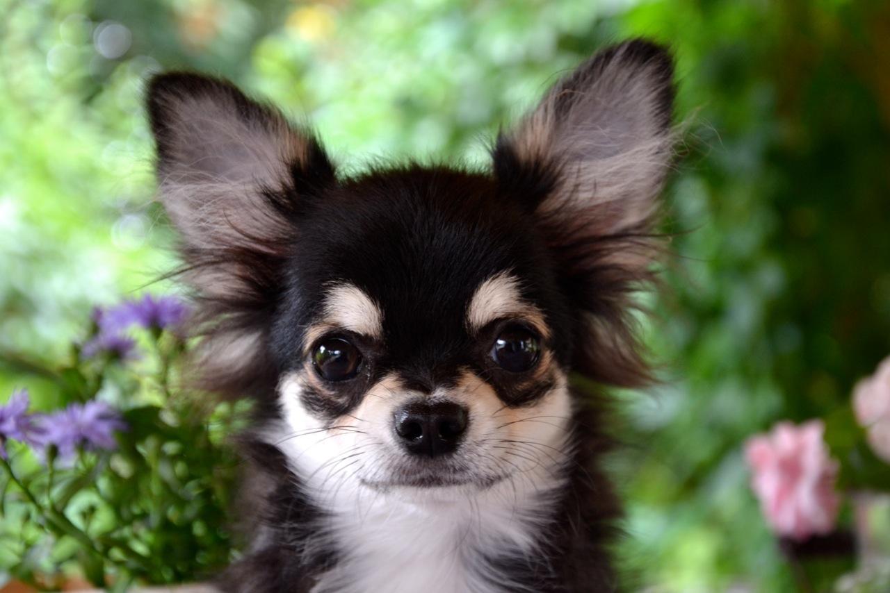 Quelindas-Chihuahua-40