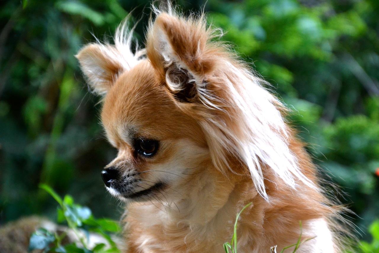 Quelindas-Chihuahua-41