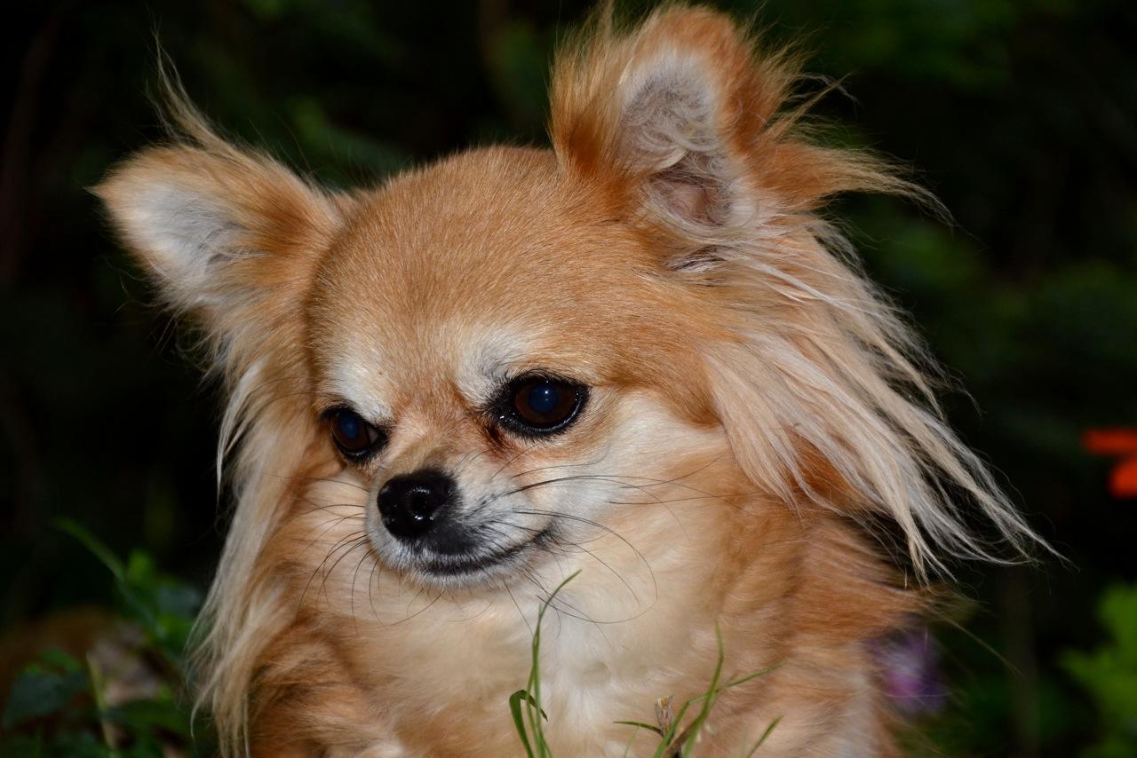 Quelindas-Chihuahua-42