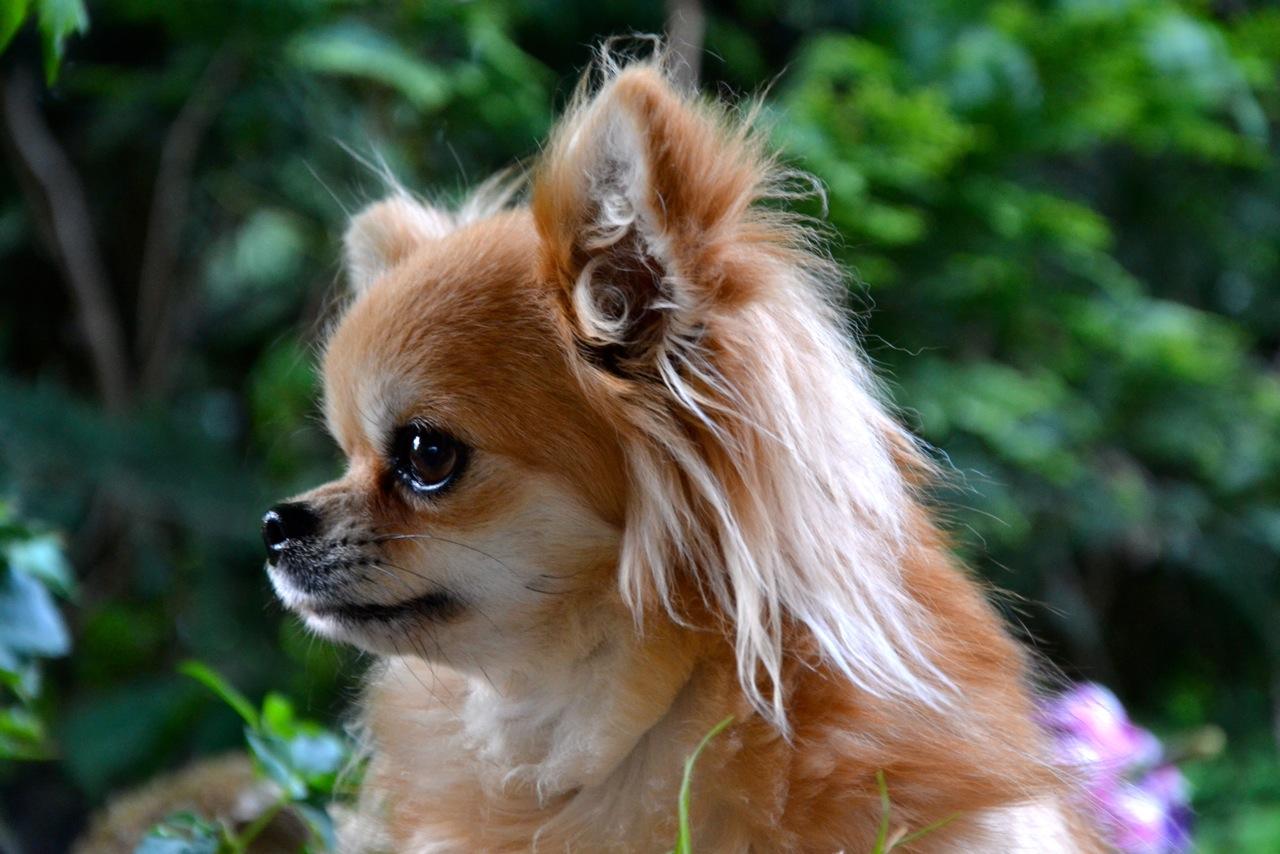 Quelindas-Chihuahua-43