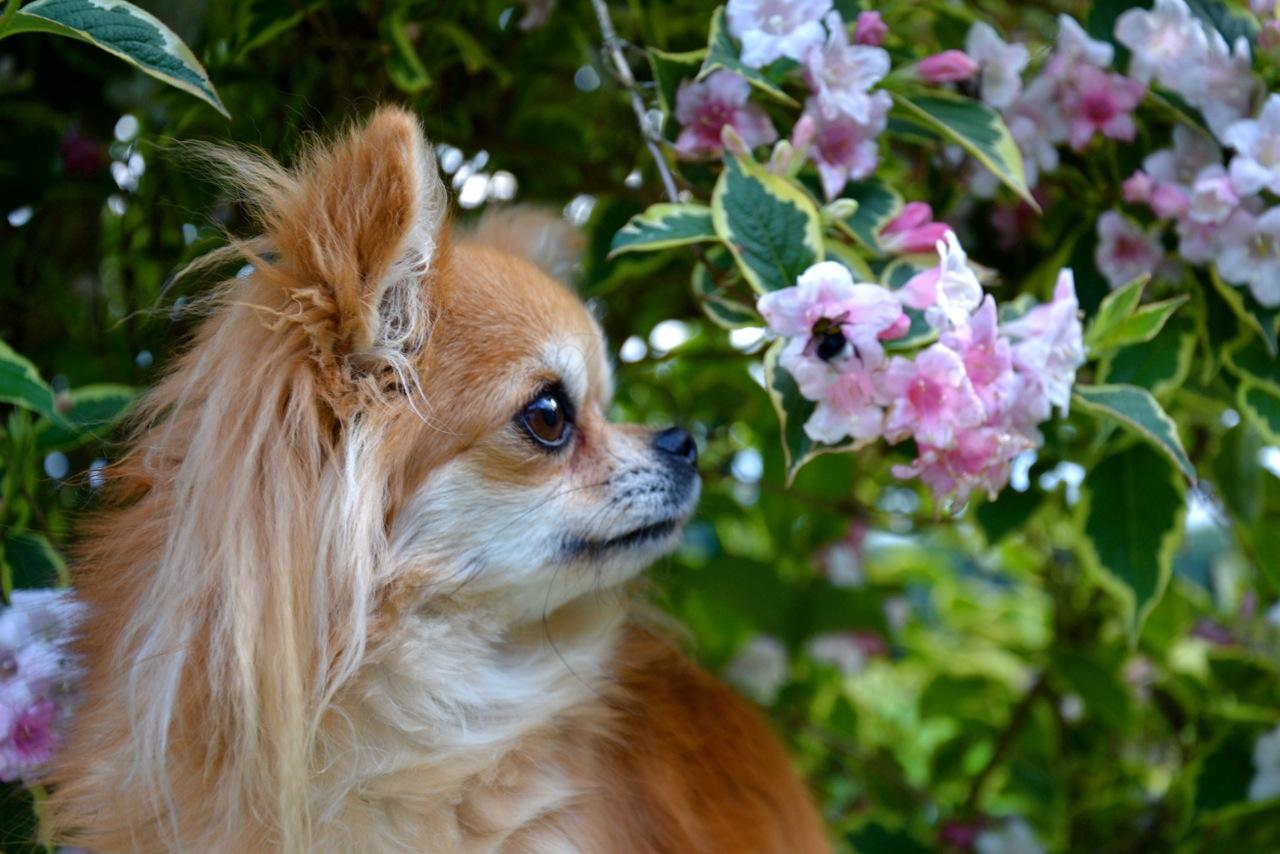 Quelindas-Chihuahua-44