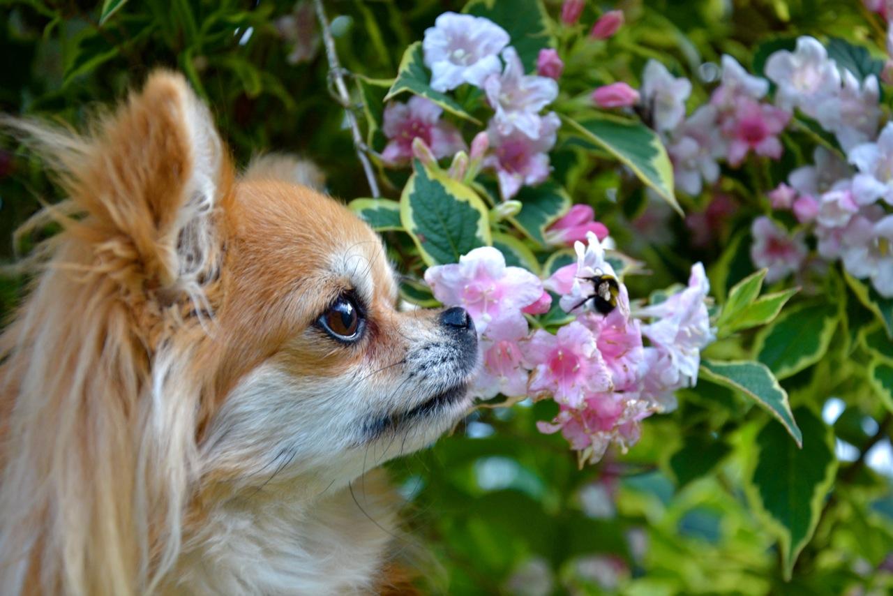 Quelindas-Chihuahua-45