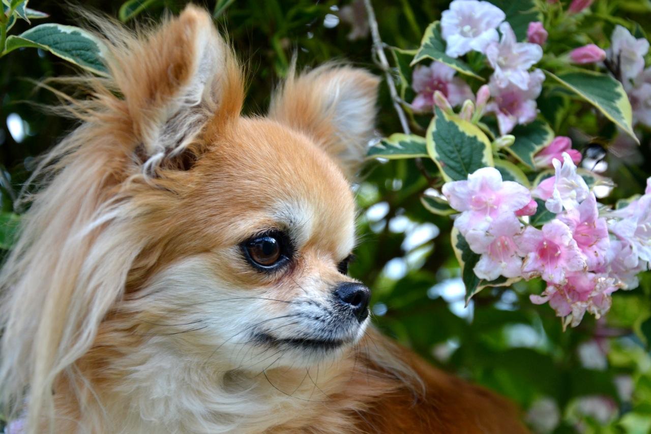 Quelindas-Chihuahua-46