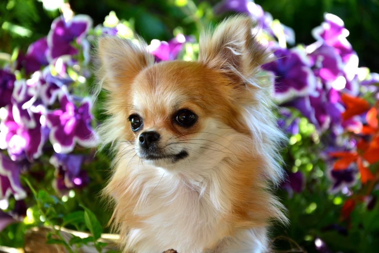 Quelindas-Chihuahua-47