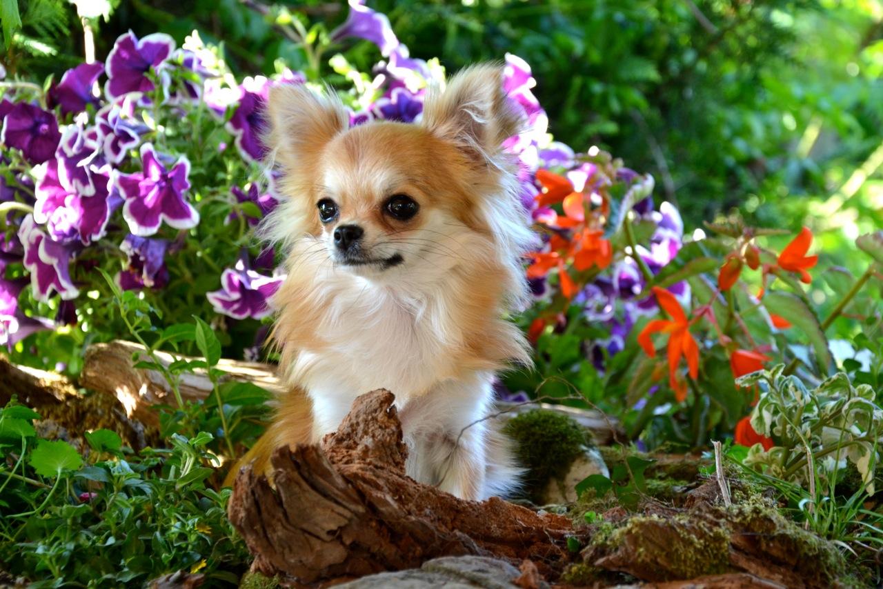 Quelindas-Chihuahua-48