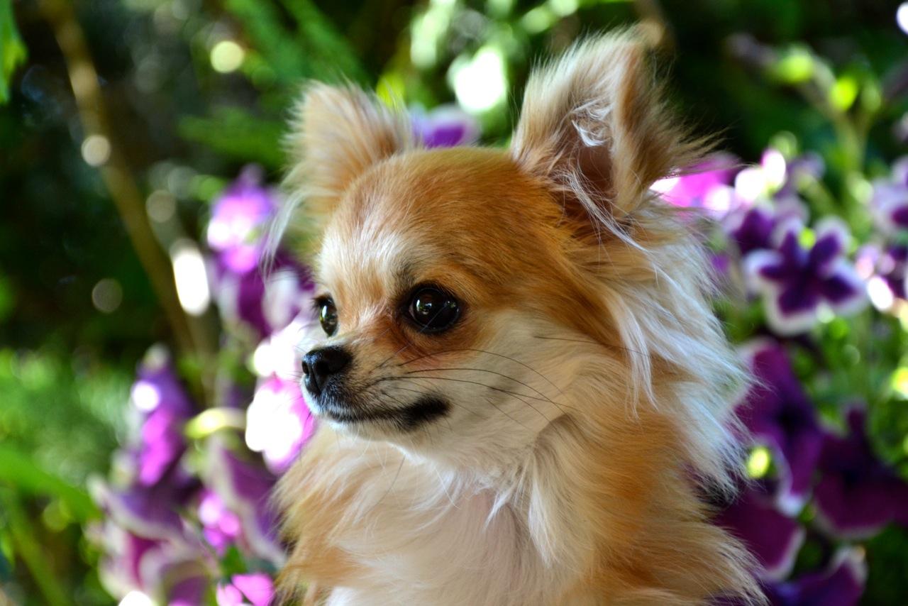 Quelindas-Chihuahua-49