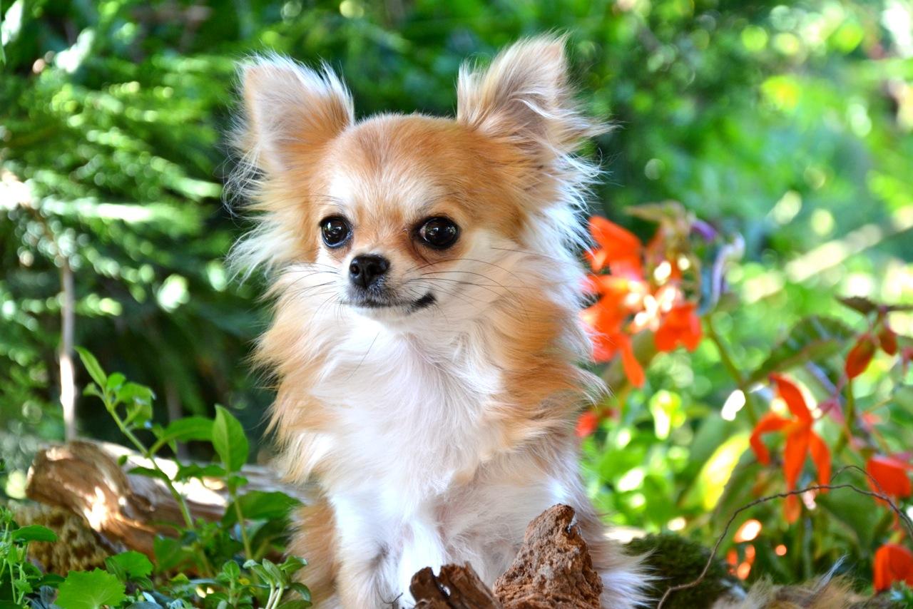 Quelindas-Chihuahua-50