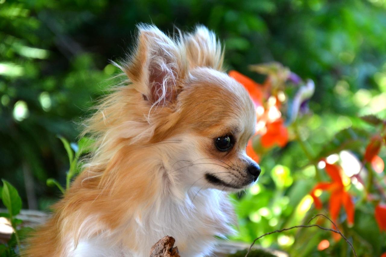 Quelindas-Chihuahua-52