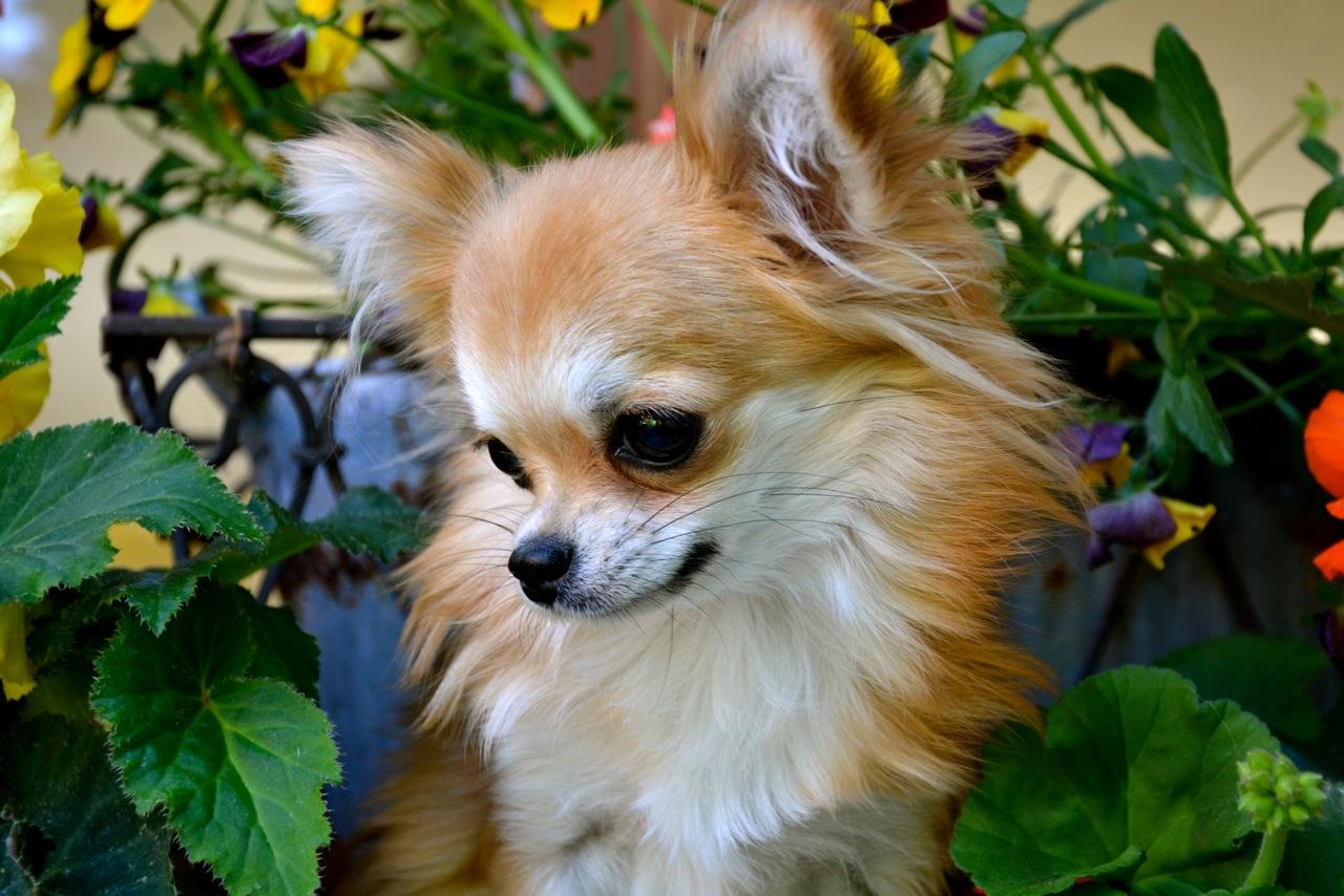Quelindas-Chihuahua-53
