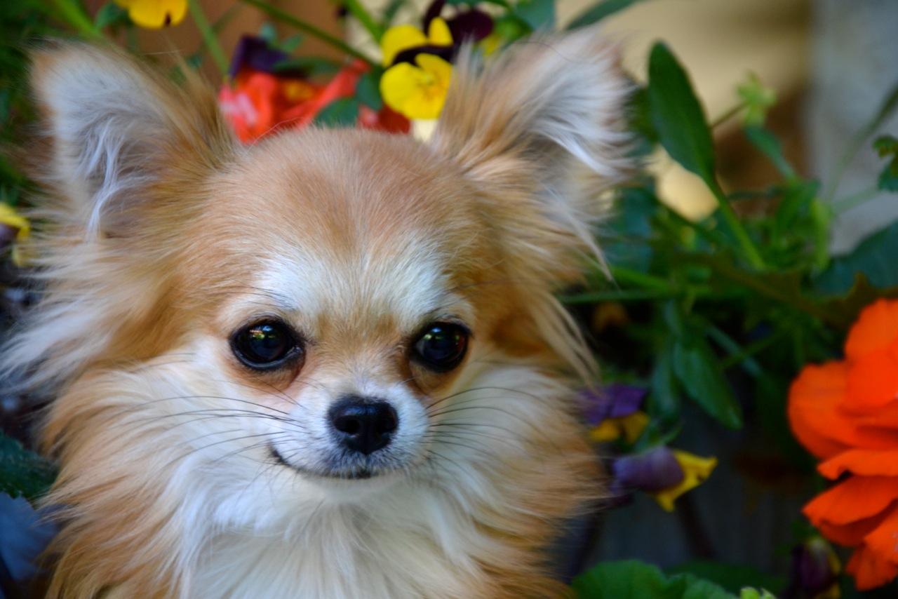 Quelindas-Chihuahua-54