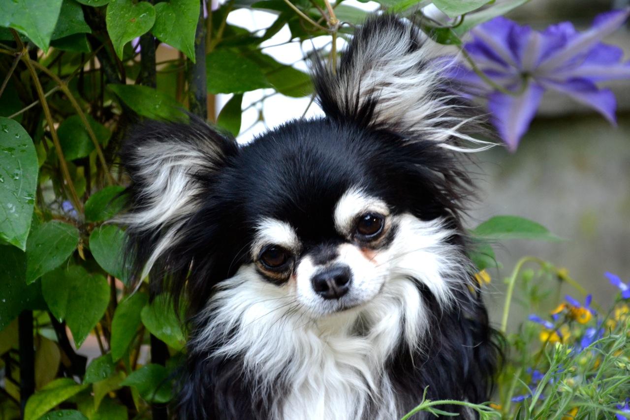 Quelindas-Chihuahua-56
