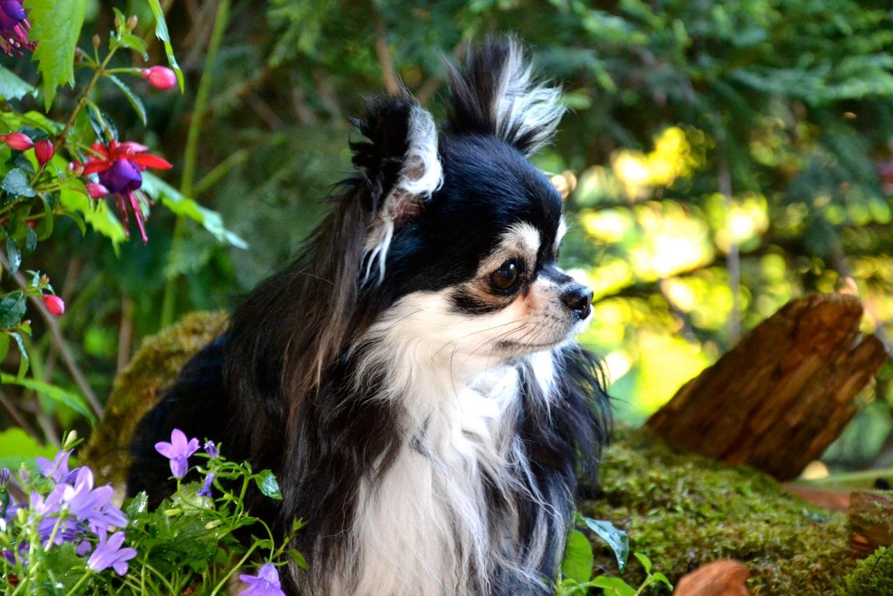 Quelindas-Chihuahua-57