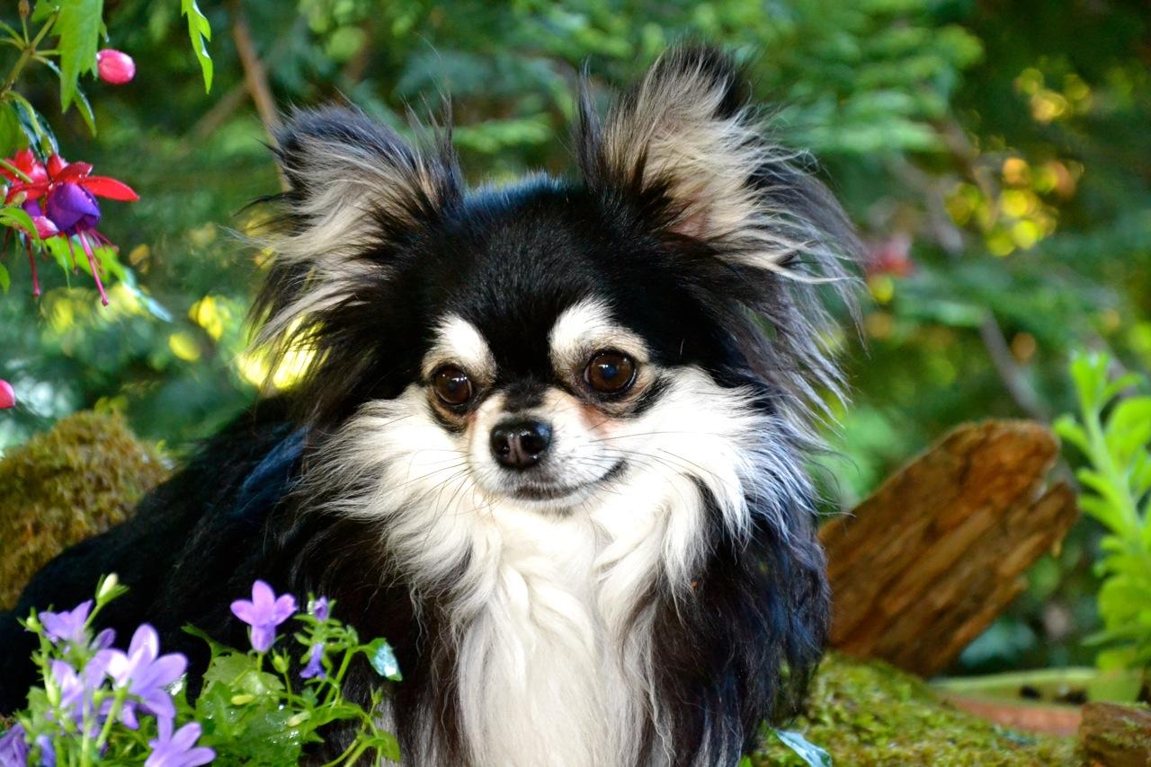 Quelindas-Chihuahua-58