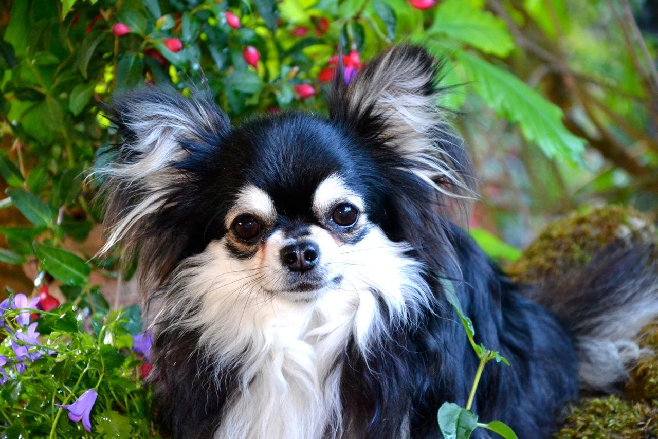 Quelindas-Chihuahua-59