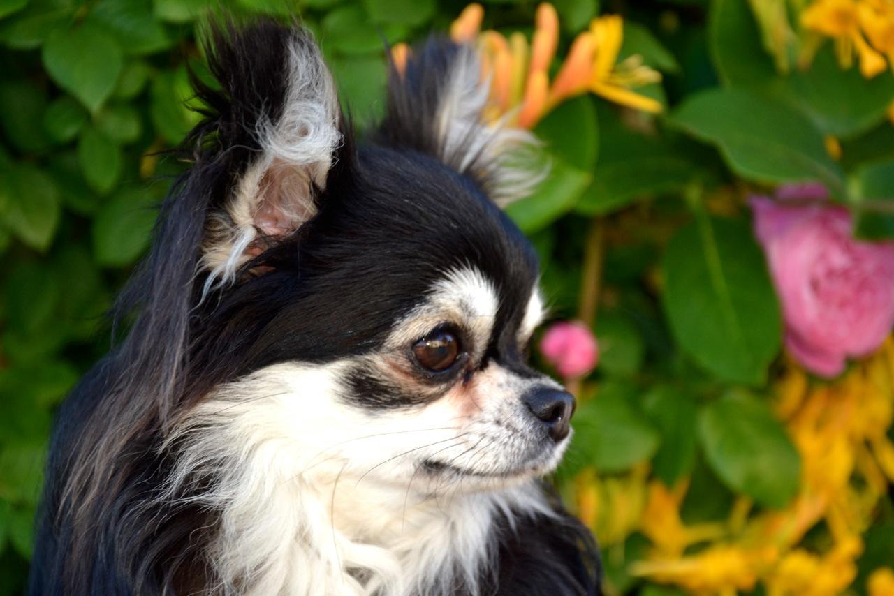 Quelindas-Chihuahua-60