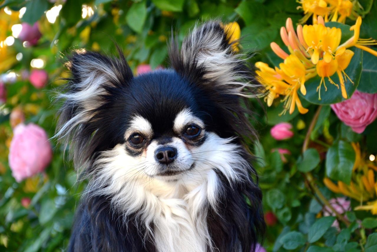Quelindas-Chihuahua-61